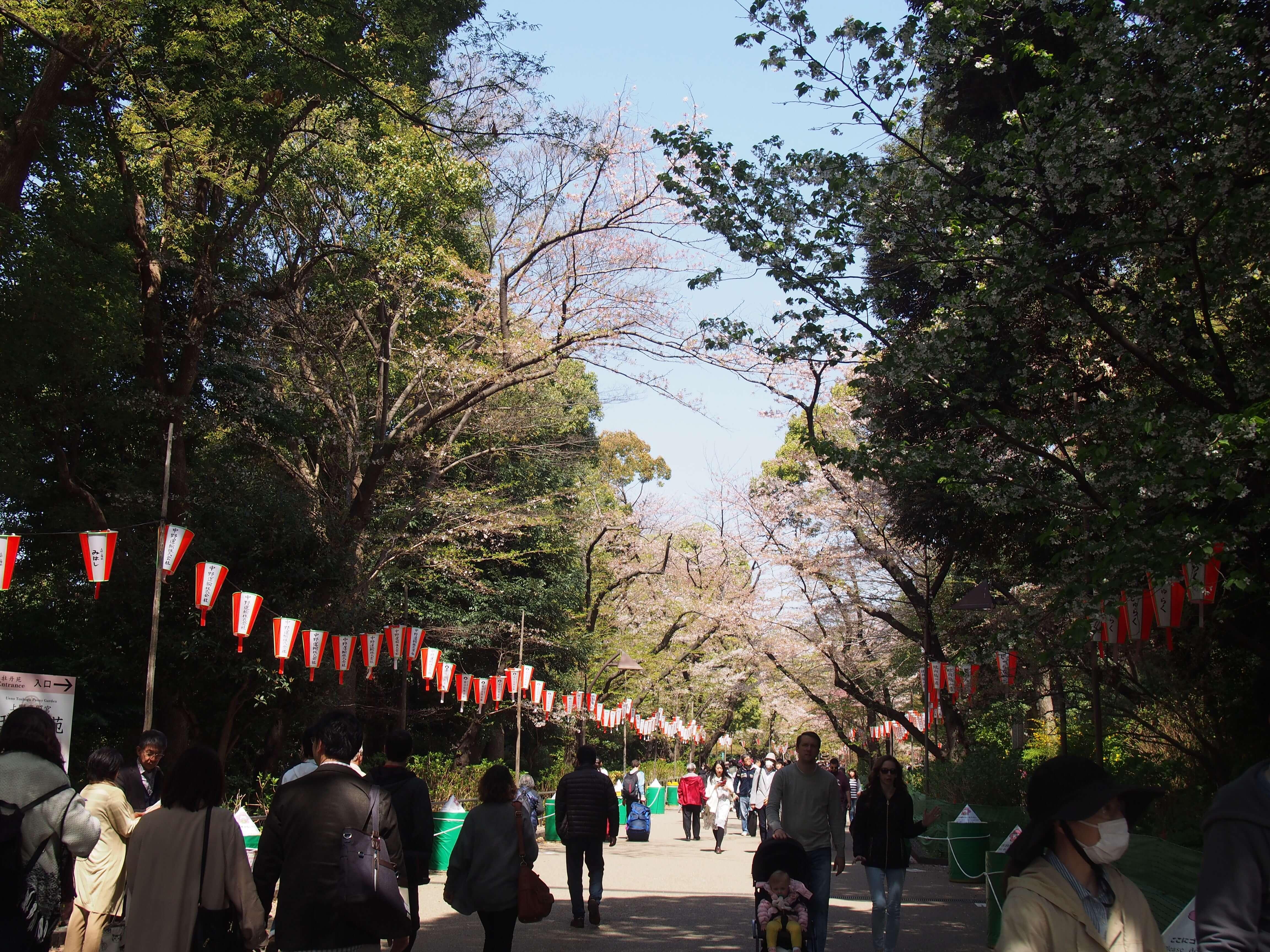 上野恩賜公園で花見