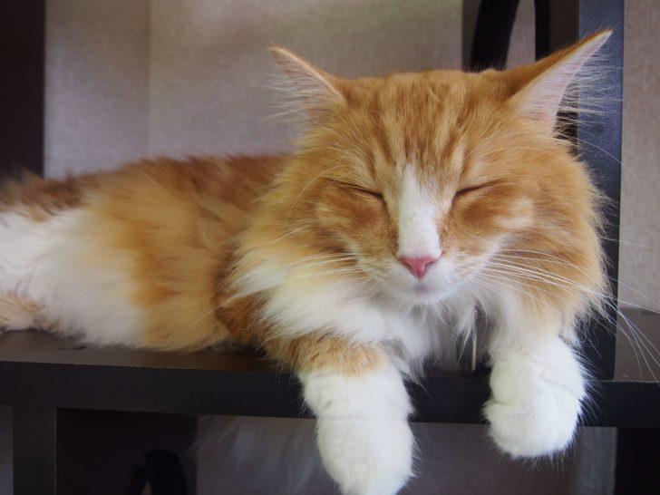 お昼過ぎの猫カフェは寝ている率が高い