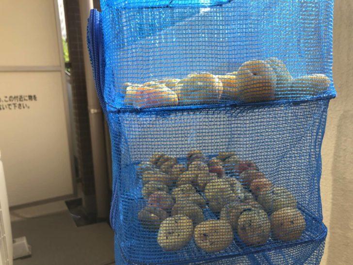 干網で梅を干す