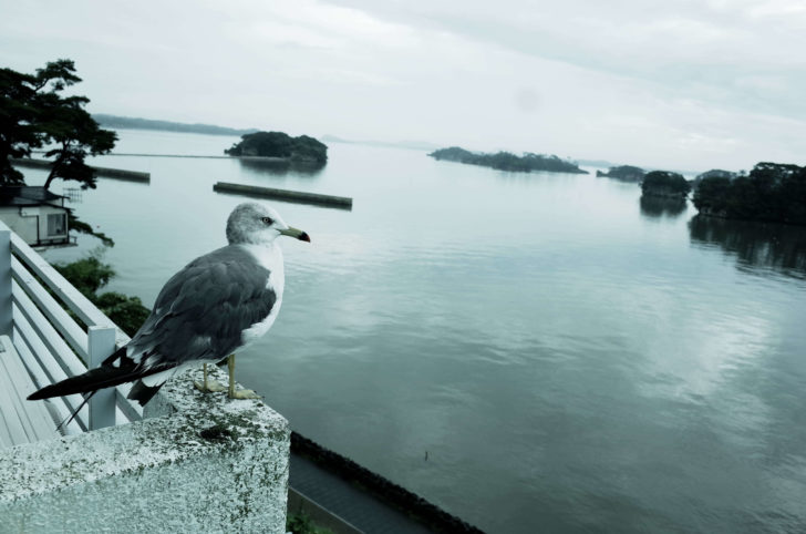 カモメと松島