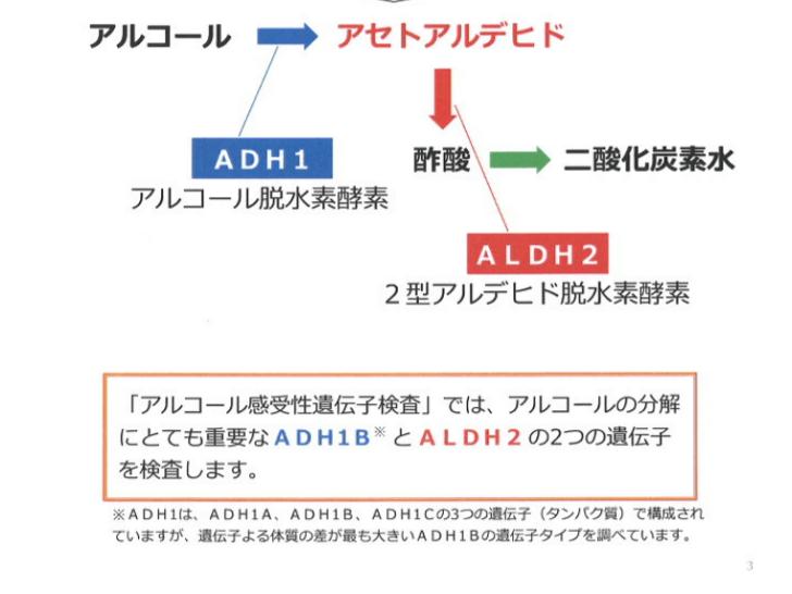 アルコールの分解には「ADH1B」と「ALDH2」が働いている